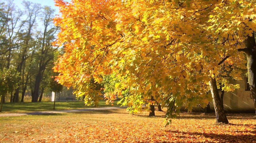 Jesienna zbiórka liści.